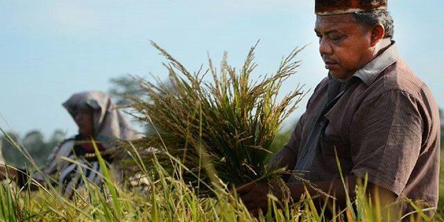 Bupati Aceh Barat Tolak Beras Impor