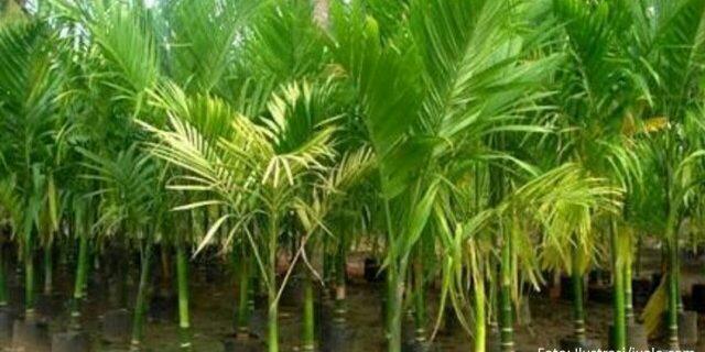 Ramli-Banta Alokasikan Rp 1 M Untuk Perkebunan