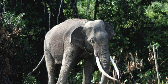 4.000 Orang Lebih Tandatangani Petisi Usut Pembunuhan Keji #gajahBunta