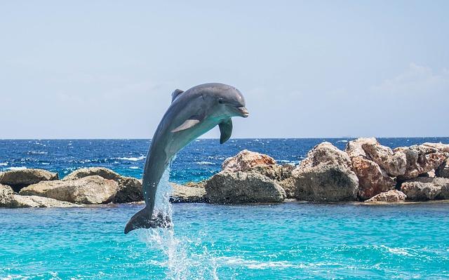 dolphin 906176 640